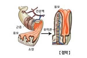 韩语词汇:人体部位