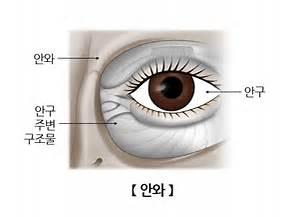 韩语人体部位