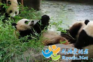 参观动物园英语作文