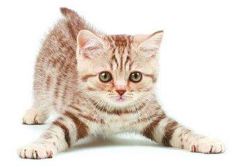 猫咪教给我们的那些事